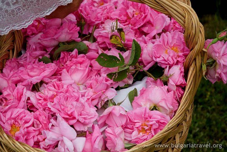 Post-ATTA-ODY_Bulgaria_Roses-768x514