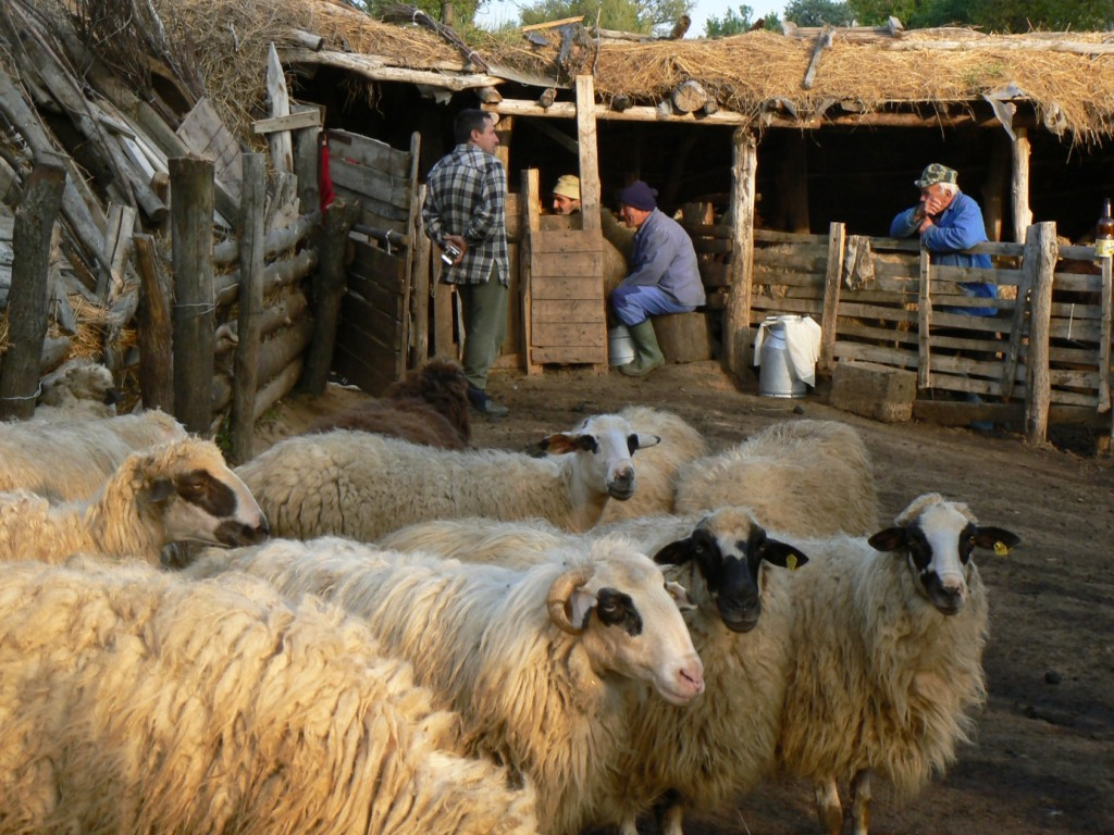 participative-travel_sheep-farm