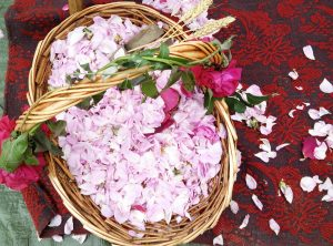 Bulgarian roses_Odysseia-In